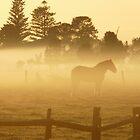 Early morning at Pyree by ChristinaR