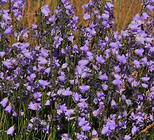 Harebells  by Vickie Emms