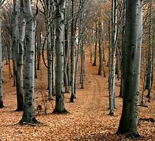 A walk in the autumn forest. by demigod