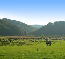 A herd of bulls on the green pasture. by demigod