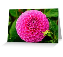 Pretty in Pink. Greeting Card