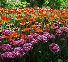 Hooray for Tulips by MarianBendeth