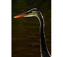 Avian Beauty ~ Part One Photographic Print