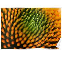 Flower: Echinacea I Poster