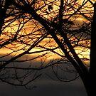Beautiful November Sunset by pat oubridge