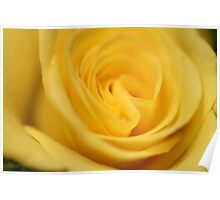 Flower: Yellow Rose I Poster