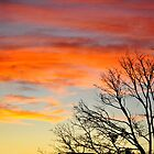 Tree Sillhouette and Sunset by April Anderson