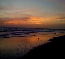 Good Night, Heron. Good Night, Boca Grande. by Ainsley Kellar Creations