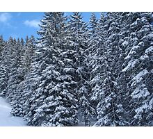 Snowy Trees in Austria Photographic Print