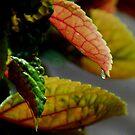 Dew Drop by Irvin Le Blanc