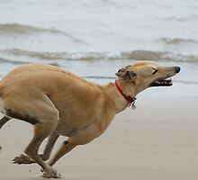 Life's A Beach by Sally J Hunter