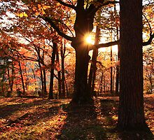 Fall Sunset at Signal Point by Jennifer Rigsby