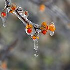 Frozen Drop by Mike Donovan