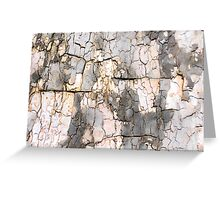 Springtime Bark Study No. 1 Greeting Card