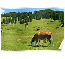 Cows on the green mountain pasture. Poster