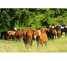Herd of horses near the forest Photographic Print