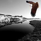"""Kite Flying at Mara Creek"" by Mike Larder"