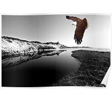 """Kite Flying at Mara Creek"" Poster"