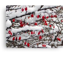 Snowy Morn No.2 Canvas Print