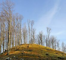 Empty hill curve in warm colours by demigod