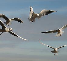 Birds in flight by SusiBloeck