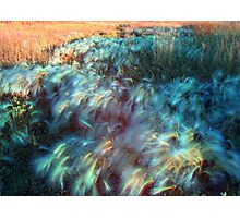 Blowin' in the Wind Photographic Print
