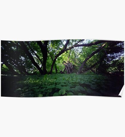 Pinhole Study: Shaded Gem by The Grand River Poster