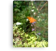 Beautiful Blur - the Butterfly as Abstract Art Metal Print