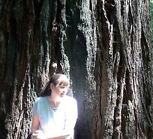 A Redwood Curtain by Pete Janes