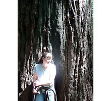 A Redwood Curtain Photographic Print