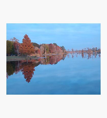 Cypresses on the Point - Autumn Photographic Print