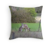 Kangaroos Throw Pillow
