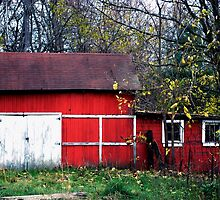 Old Country Barn by Judy Seltenright