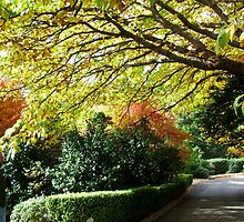 Fall/Autumn Colours in Oz by Janette Rodgers