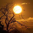Under The Sun by Steiner62