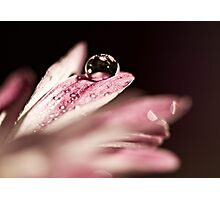 Beauty within a Drop Photographic Print