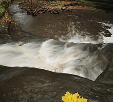 Lone Maple Leaf and Waterfall by Adam Bykowski