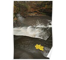 Lone Maple Leaf and Waterfall Poster