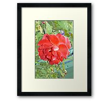 Rose of Red Framed Print