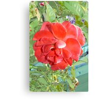 Rose of Red Canvas Print