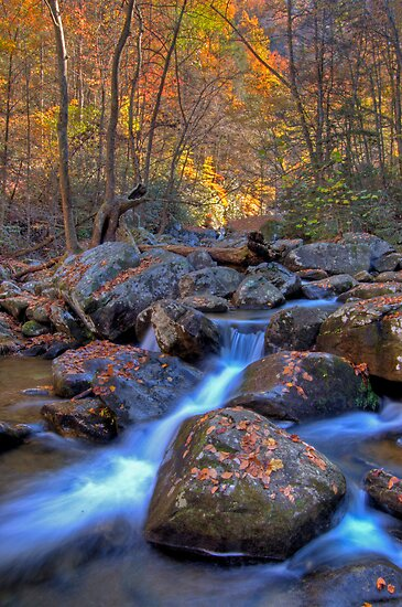 South Mountains State Park, North Carolina by Jane Best