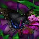 Painted Butterfly by Irvin Le Blanc