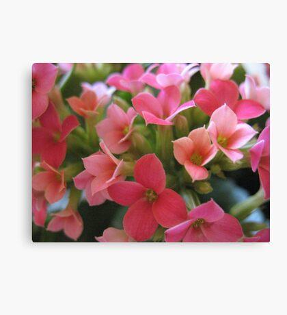 Pink Taffy Suprise Canvas Print