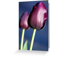 Tulip - Queen of the Night Greeting Card