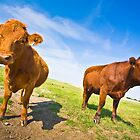 Two Cows by Marlene Hielema