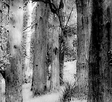 Wood/Trees by Caroline Gorka