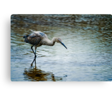 In Search of Lunch Canvas Print