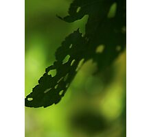 Green bokeh leaf Photographic Print