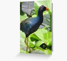 Everglades florida  Greeting Card