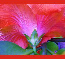 Pink Hibiscus , Throw Pillow, Cushion  by Virginia  McGowan